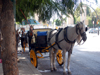 Horse drawn transport